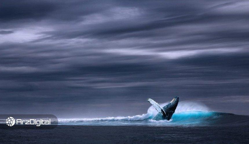 وضعیت نهنگهای بیت کوین در نزدیکی هاوینگ؛ خروج از فاز هودل؟
